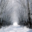 Stock Photo: Forest lane in winter