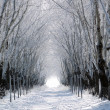 Forest lane in winter — Stock Photo