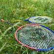 Royalty-Free Stock Photo: Two badminton rackets in grass