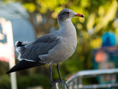 Saegull on handrail — Stock Photo