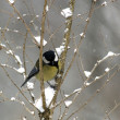 Stock Photo: Titmouse on twig