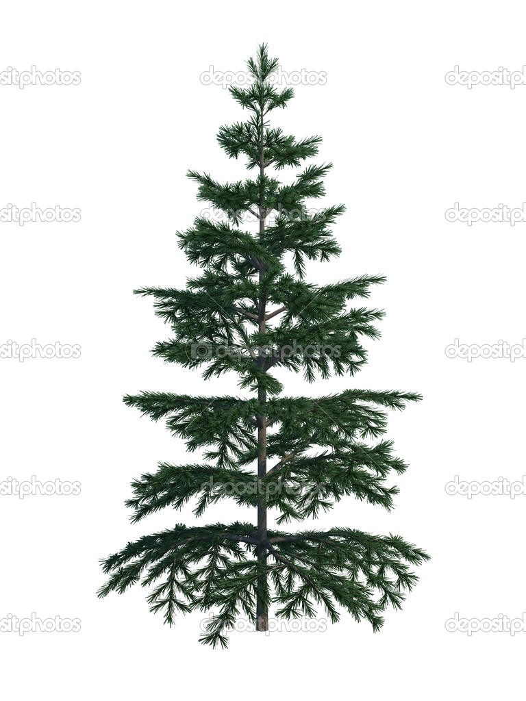 Nice tree fir on white background — Stock Photo #1007968