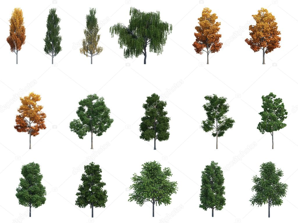 Mega pack Trees on the white — Stock Photo #1008431