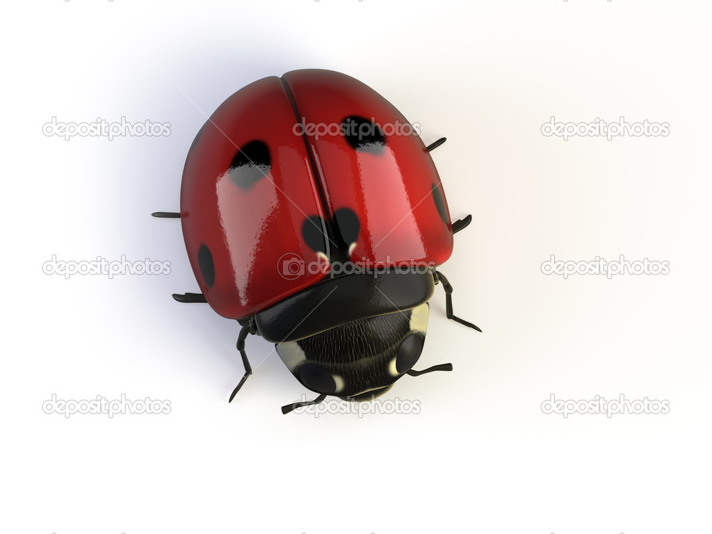3d ladybird isolated on white — Stock Photo #1770090