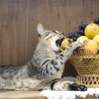 Cat with fruits — Stock Photo