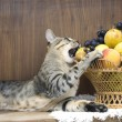 Stock Photo: Cat with fruits