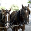 Stock Photo: Horses in street in Evorfor tourist