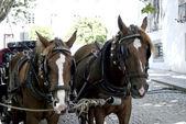 Horses in street in Evora for tourist — Stock Photo