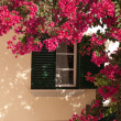 Window from house with beautiful flower - Stock Photo