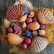 Stock Photo: Seashells composition