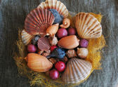 Seashells composition — Stock Photo