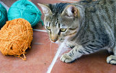 Cat with yarn — Stock Photo