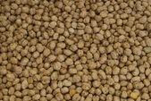 Bean background — Stock Photo