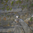 Stock Photo: Stork on rock of Atlantic ocean