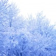 Snow on the trees — Stock Photo