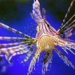 Beautiful fish — Stock Photo #1012159