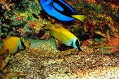 Beautiful yellow fish — Stock Photo