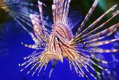 Beautiful fish — Stock Photo