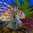 Beautiful fish — Stock Photo #1025201