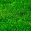 Green grass — Stock Photo #1025360