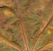 Grunge closeup paint of autumn — Stock Photo