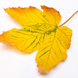 Royalty-Free Stock Photo: Yellow leaf