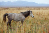 лошадь — Стоковое фото