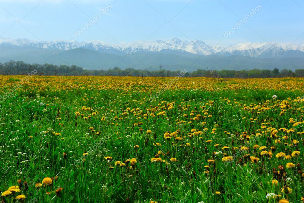 春天繁花似锦的原野上的蒲公英 — 照片作者 alex7021