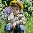 Boy-dandelion — Stock Photo