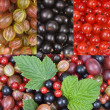Different berries — Stock Photo #1067978