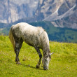 Horse grazed in mountains — Stock Photo