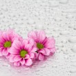 Pink flowers with water drops — Stock Photo #2021523