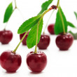 Cherry — Stock Photo #1073434