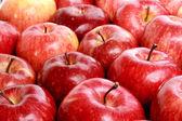 苹果 — 图库照片