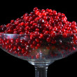 Cranberry. - Stock Photo