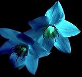 Flowers. — 图库照片