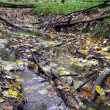 Royalty-Free Stock Photo: Stream in the autumn forest.