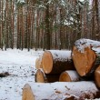 Tree felling — Stock Photo