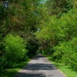 Tree-lined road — Stock Photo