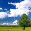 Photo: Lone tree in green field