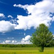 Foto Stock: Lone tree in green field