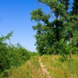 Stock Photo: Summer path