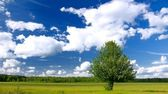 Lone tree in green field — Stock Photo