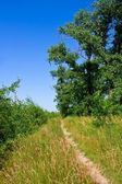 Summer path — Stock Photo