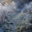 Stock Photo: First Frosty Morning