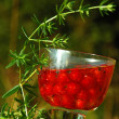 Red Currant in the Glass Of Wine - Stock Photo