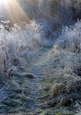 First Frosty Morning — Stock Photo