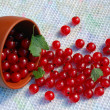 Stock Photo: Red Currant And Bowl On Towel