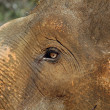 The Eye of the Baby Elephant — Stock Photo #1038918