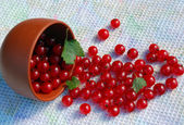 Red Currant And The Bowl On The Towel — Stock Photo